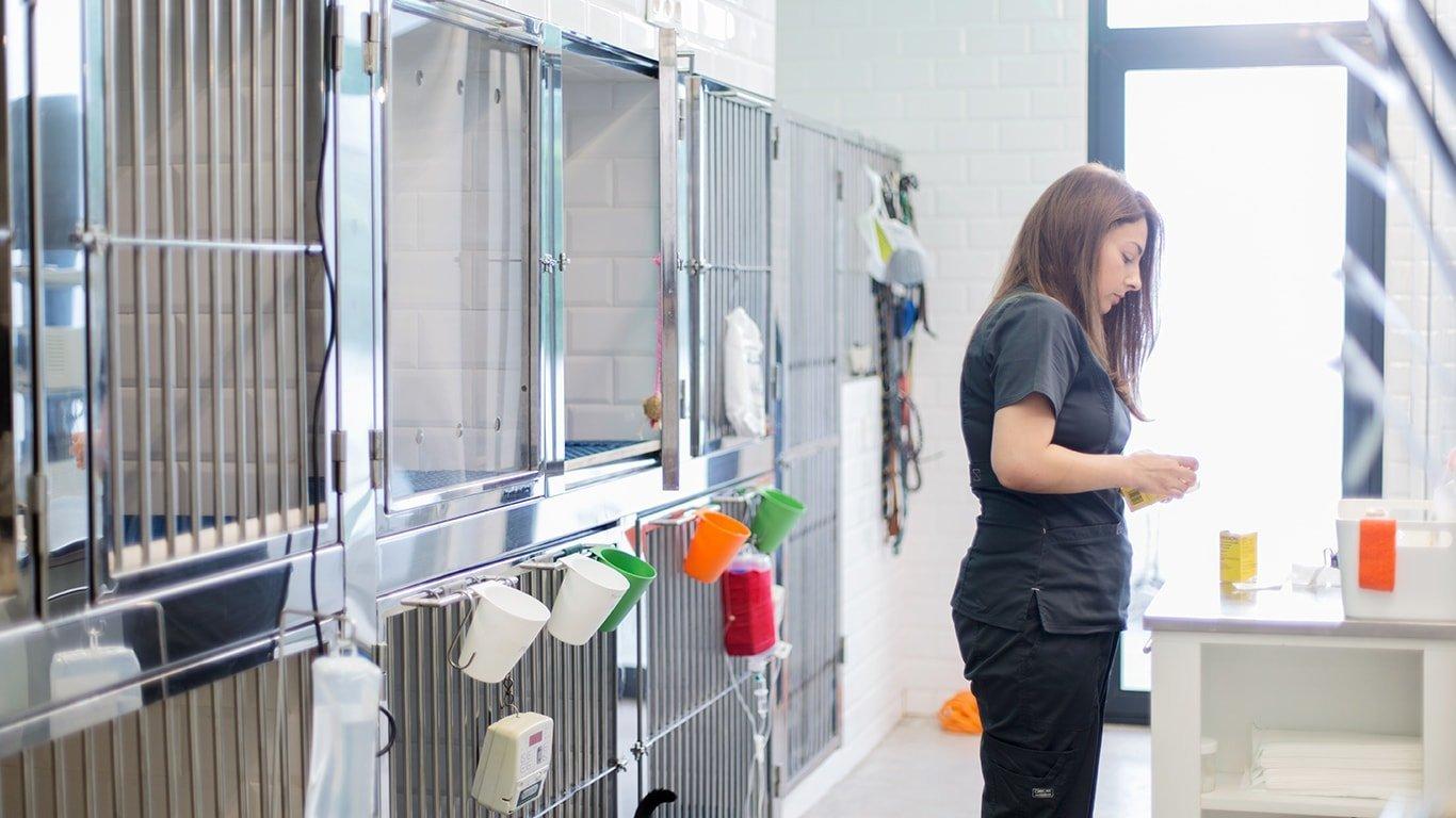 laboratorio y análisis clínicos veterinarios